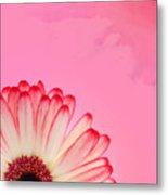 Gerbera Pink Metal Print