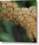 German Millet Metal Print