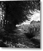 German Path Black And White Metal Print by Edward Myers