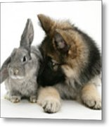 German Shepherd And Rabbit Metal Print by Mark Taylor