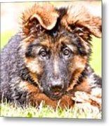German Shepherd Puppy Metal Print