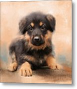 German Shepherd Puppy Portrait Metal Print