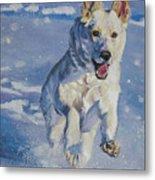 German Shepherd White In Snow Metal Print by Lee Ann Shepard