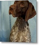 German Shorthaired Pointer 129 Metal Print