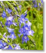 Germander Speedwell Metal Print
