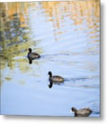 Getting My Ducks In A Row Metal Print