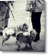 Getting To Know You - Puppies On Parade Metal Print