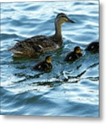 Getting Your Ducks In A Row Metal Print