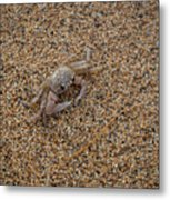 Ghost Crab Metal Print