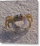 Ghost Crab Metal Print