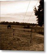 Ghost Horses Of Huckleberry Lane Metal Print