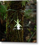 Ghost Orchid Of The Fakahatchee Strand Metal Print