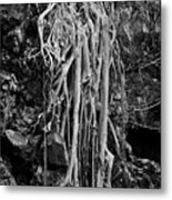 Ghostly Roots - Bw Metal Print