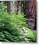 Giant Among The Forest Metal Print