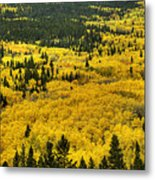 Giant Aspen Glen 2 Metal Print