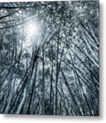 Giant Bamboo In Forest With Sunflare, Black And White Metal Print