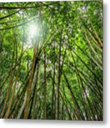 Giant Bamboo In Forest With Sunflare Metal Print