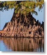 Giant Cypress Tree In Reelfoot Lake Metal Print