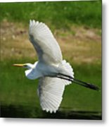 Giant Egret Grace Metal Print