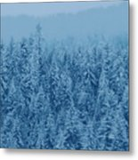 Giant Forest Metal Print