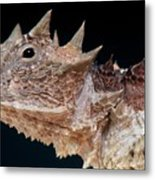 Giant Horned Lizard Metal Print