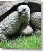 Giant Land Turtle Metal Print