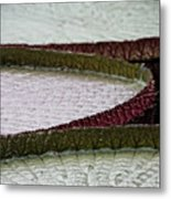 Giant Lilly Pads Metal Print