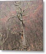 Giant Oak Tree Metal Print