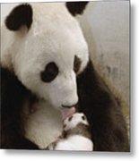 Giant Panda Ailuropoda Melanoleuca Xi Metal Print by Katherine Feng