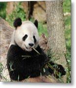 Giant Panda Bear Lounging On Against Tree Trunk Metal Print
