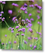 Giant Swallowtail Butterfly In Purple Field Metal Print