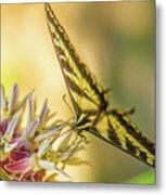 Giant Swallowtail With Yosemite Showy Milkweed Metal Print