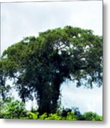 Giant Tree In Amazon Skyline Metal Print