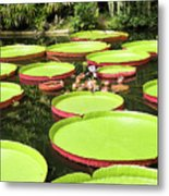 Giant Water Lily Platters Metal Print