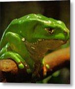 Giant Waxy Monkey Tree Frog Metal Print
