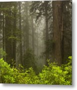 Giants In The Mist Metal Print