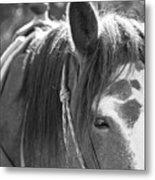 Gillagan The Horse In Glacier National Park   Metal Print