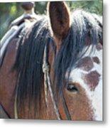 Gilligan The Horse Glacier National Park Metal Print