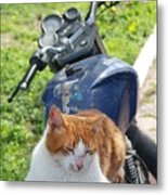 Ginger And White Tabby Cat Sunbathing On A Motorcycle Metal Print