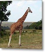 Giraffe 3 Metal Print