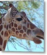 Giraffe 5 Metal Print