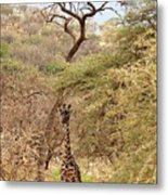 Giraffe Camouflage Metal Print