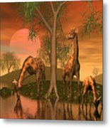 Giraffe Family By John Junek Metal Print