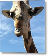 Giraffe Greeting Metal Print