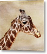 Giraffe Portrait With Texture Metal Print