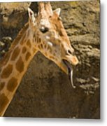 Giraffe Raspberry Metal Print