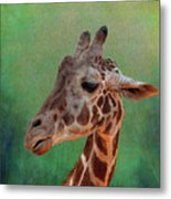 Giraffe Square Painted Metal Print