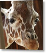 Giraffe Taking A Peek Metal Print