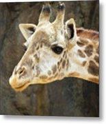 Giraffe Up Close Metal Print