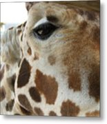 Giraffe Up Close Metal Print
